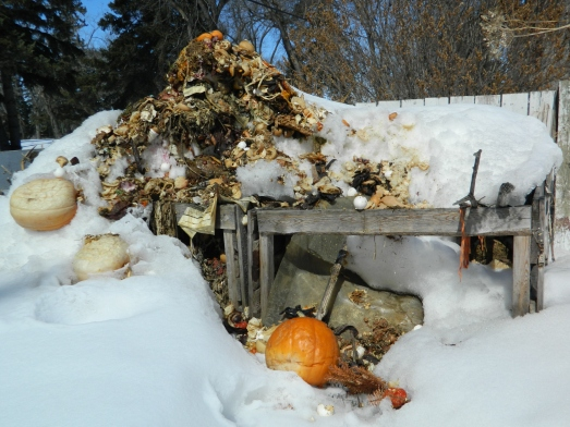I've been adding to my compost pile all winter, and the snow has fallen just as fast, making it into a towering white mountain. As soon as the snow melts I'll add last years leaves and it will be much less offensive looking,