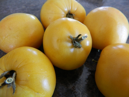 Long Keeper tomatoes: these were harvested last summer and kept perfectly in my neighbours basement until now.