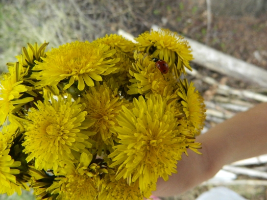 """Belén collected dandelions on the way and termed the whole excursion a """"real success"""". I think this was mostly due to the dandelions."""